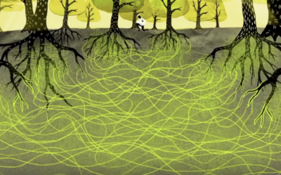 Hoe bomen in het geheim met elkaar spreken